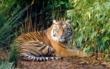 © Frédy Mercay / WWF