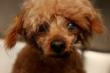 Adopt a dog, avoid supporting the puppy mill industry