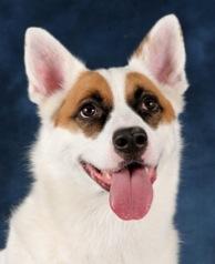 "Sasha star of ""Good Doggie Super Bowl ad."