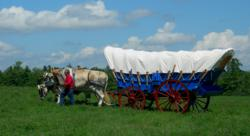 Ray Morvan with Brown Swiss Oxen pulling Conestoga Covered Wagon in VT