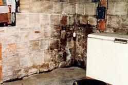 Basement mold can lead to health risks in the home.
