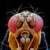Drosophila @ EurekaMag.com