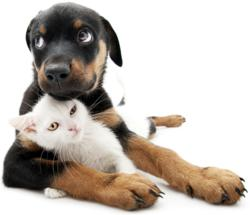 Puppy and Kitten Vaccinations at Your Neighborhood Pet Store