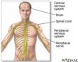 Nervous System @ EurekaMag.com