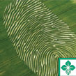 Crop Insurance Programs Available