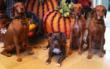 pit bulls, BSL, BDL, breed discriminatory laws, baseball, Buehrle, Miami Marlins
