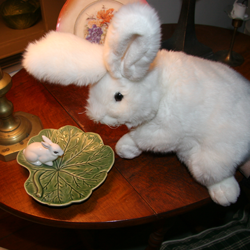Bunny Fitzgrundy carefully checks out a possible rival.