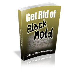 get rid of black mold