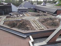 Green roof in Ottawa