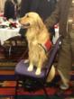 Betty at the John Henry Award Celebration