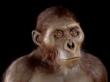 Australopithecus @ EurekaMag.com