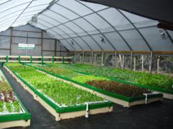 Green Acre Organics