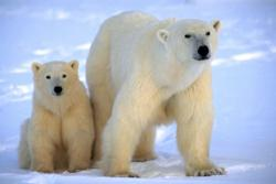 polar bear tours, polar bear trip
