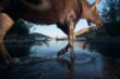 Moose, Ealue Lake, British Columbia, 2010 ©Paul Colangelo