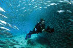 Luxury Diving