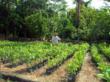 Andre Leite Alves Organic Garden 2012