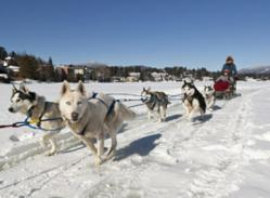 Dogsled rides - just one way to play in the Adirondack snow!