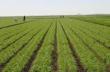 Agriculture @ ScienceAlerts.com