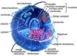 Biology @ ScienceAlerts.com