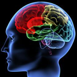 Brain, Brain Games, Fun Brain, eLearning, Online Education, brain teasers, online games