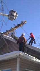 Swingle Crew Raises Tree from Roof
