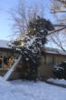 Tree blown onto roof by high winds in Colorado