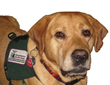 Susquehanna Service Dogs' PawsAbilities is a Weekend for Dog Lovers