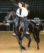 Natural horsemanship for gaited horses