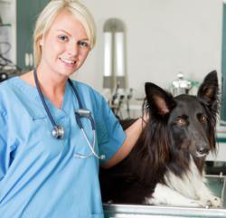 vets recommend best pet insurance