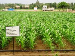 Agricultural Sciences @ ScienceAlerts.com