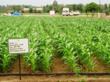 Agricultural Sciences @ ScienceAlerts.com