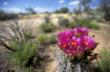 Spring is the season when the desert blooms