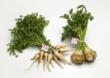 Parsley root (left) and celery root (right).