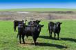 oklahoma farm auction