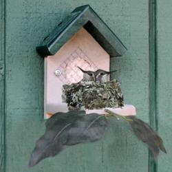 Duncraft's Hummingbird Nester