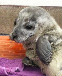 Theros, the Marine Mammal Center