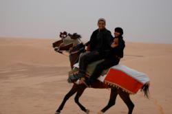 Tunisian horses