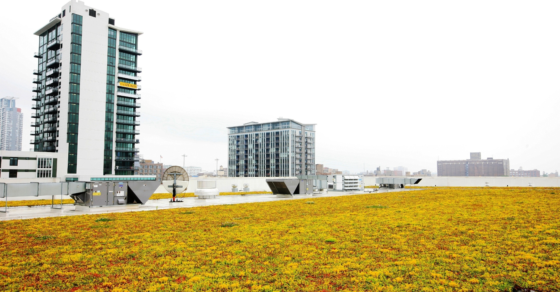 Liveroof launches overburden removal warranty program for for Green roof cost per square foot