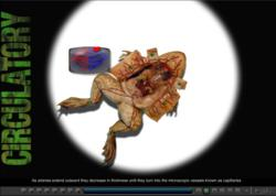 Frog Virtual Dissection Screen Shot