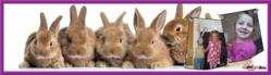 Custom poster template for Easter Holiday Decoration with Bunnies