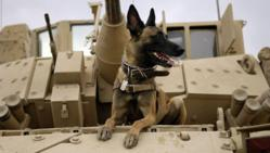 Military Working Dog sits on a M2 Bradley tank.