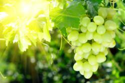 Egyfarm grapes