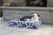 Boston Terrier On Orthopedic Dog Bed
