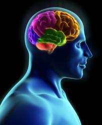 train your mind change your brain free pdf