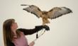 Live Yellowstone raptors at Wyoming's Buffalo Bill Historical Center leave visitors rapt with attention