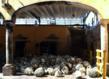 Agave pinas awaiting processing.  (photo courtesy No Mas!)