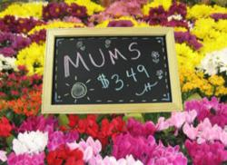 Small Chalkboard Sign Makes Big Impact