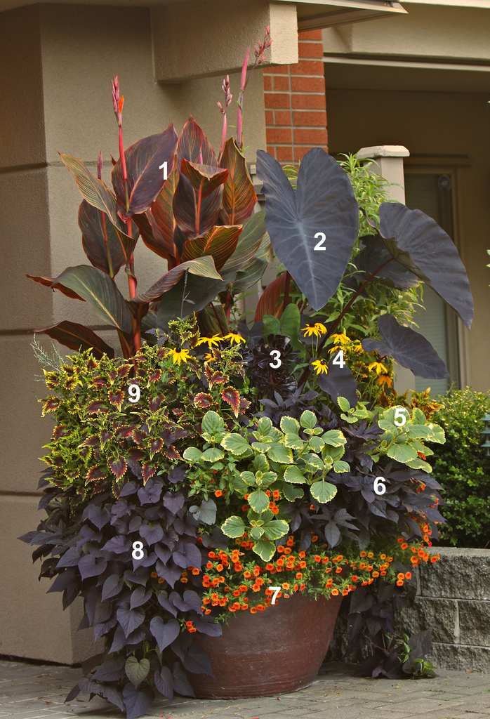 Overwhelmed by mixed containers try these 10 tips from the pros - Container gardening ...