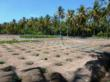 Vegetable cultivation on the Maldives @ VolkerKleinhenz.com