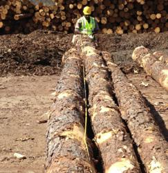 Forest2Market Analyst Javon Carter Measuring Sawtimber